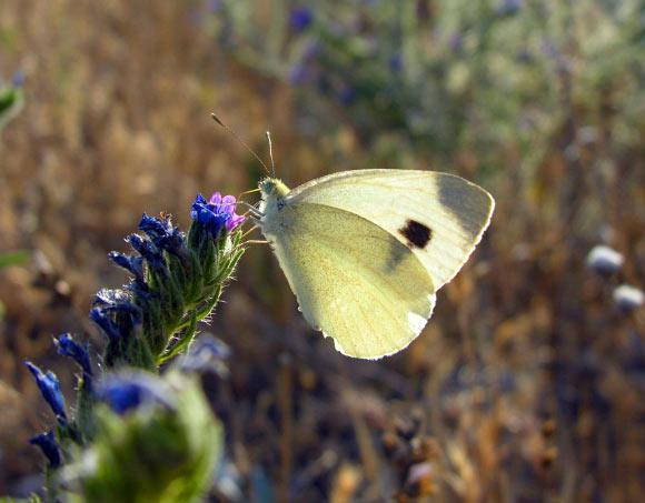 Scientists Discovered Connection Between Insect Color And Climate