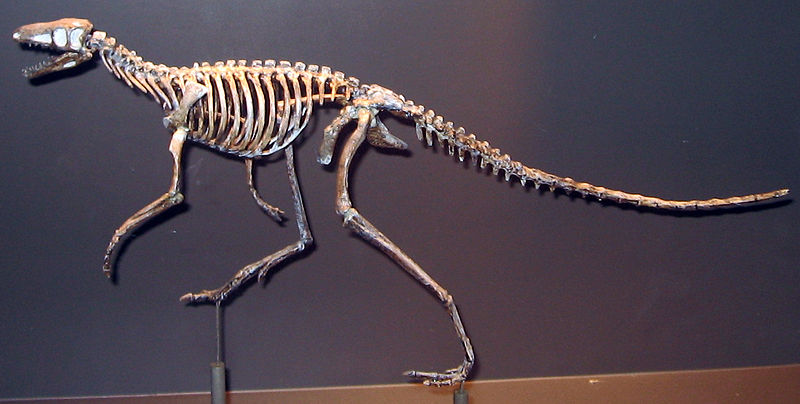 Dinosaurs were warm-blooded or cold-blooded? Scientists say they are in 'middle'