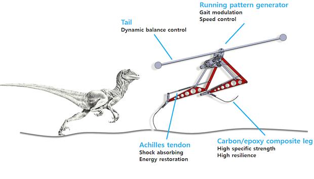 Velociraptor Inspired Designed Robot Raptor in Korea Outruns Usain Bolt