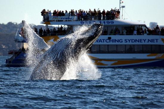 Boston Whale Watching Trip Became An Overnight Torment