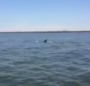 Whale in Elizabeth River