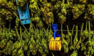 Marijuana dispensary in Denver, Colorado, USA.