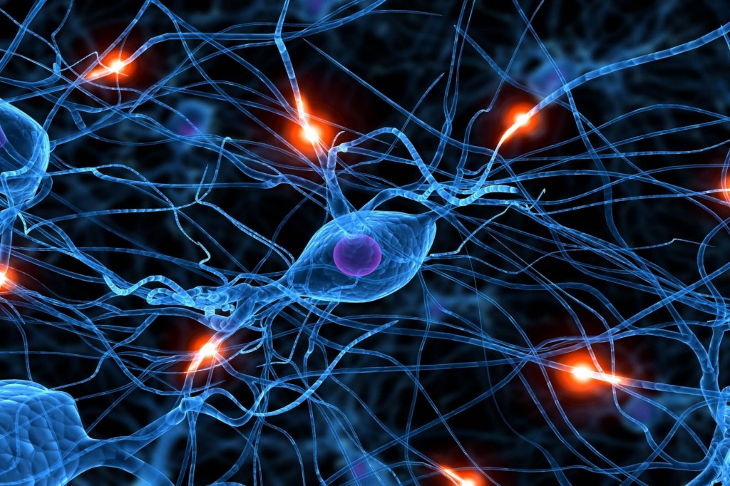 Alzheimer's and Schizophrenia Cause Unveiled
