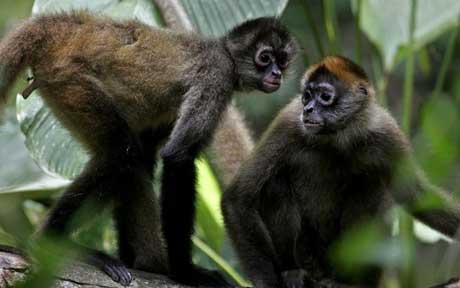 Nicaragua Animal Release