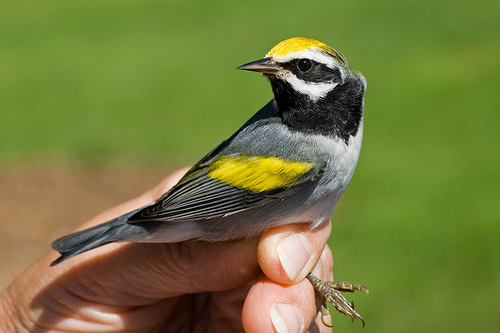 Bird Species Uses Low Frequency Sounds to Navigate and Detect Severe Weather Conditions