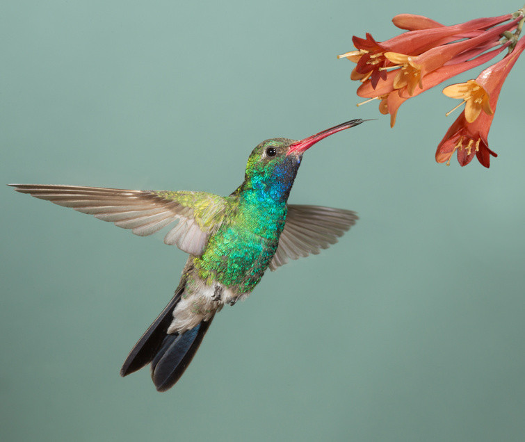 The Hovering Ability of Hummingbirds Interrupted by Movement of Other Objects