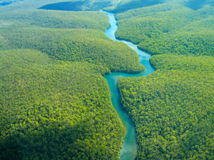 Tropical Deforestation Could Affect Climate Changes on Both Regional and Global Scale