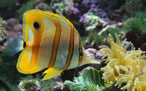 ocean life could face mass extinction
