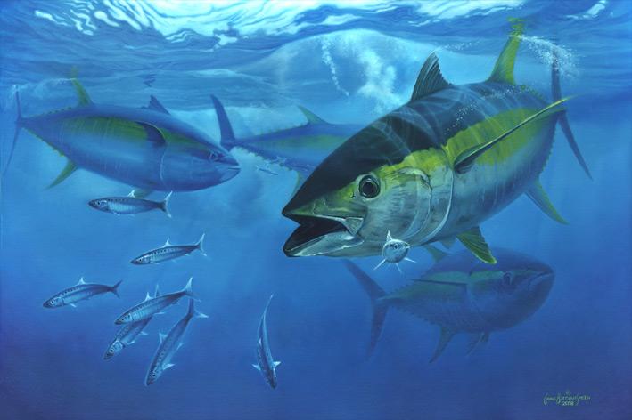 Mercury Levels in Yellowfin Tuna