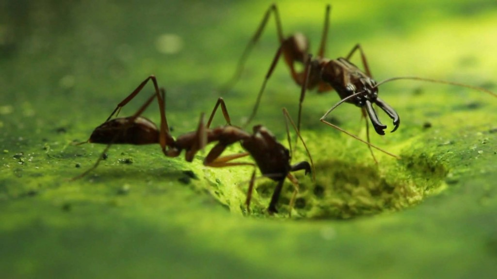 New Study Casts Light on Trap-Jaw Ants' Escape Mechanism