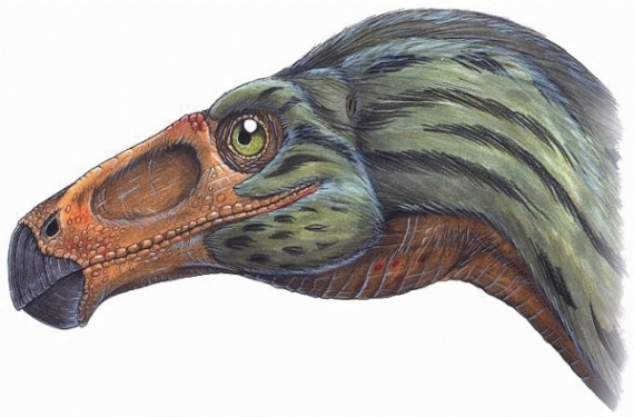 Scientists Deny Bird Beaks Can Be Turned into Dinosaur Snouts