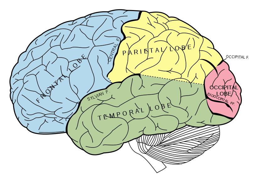 "alt=""brain mapping"""