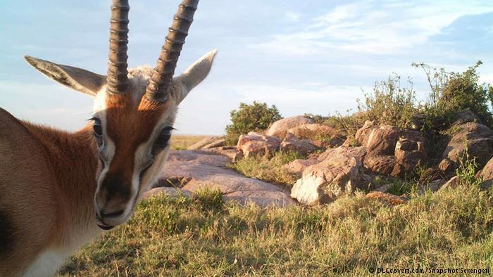 """alt=""""Pictures Snapped with Camera traps in Serengeti"""""""