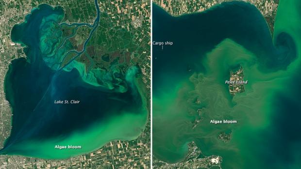 """""""lake erie st. clair algae bloom"""""""