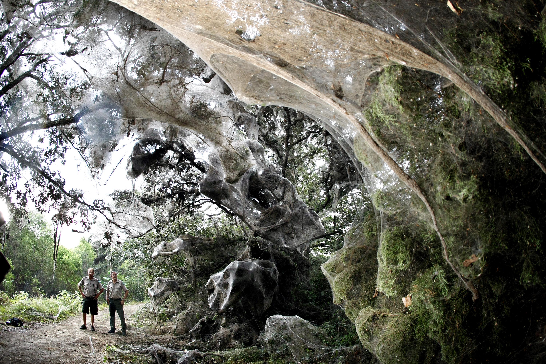 Dallas Spiders Built a Giant Web • Utah People's Post