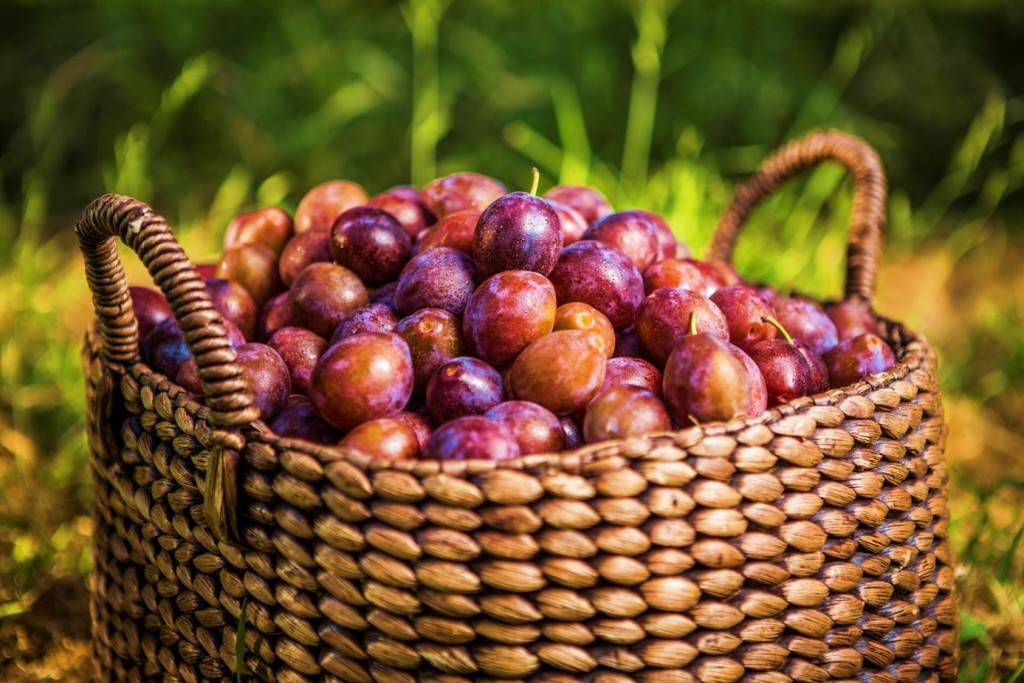 """""""basket of plums"""""""