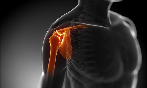 """""""shoulder bone"""""""