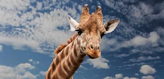 """long-necked giraffe"""