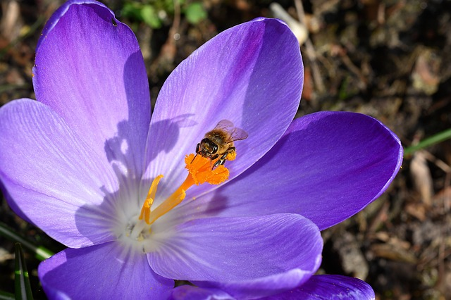 """""""Some plants produce caffeine to attract more bees."""""""