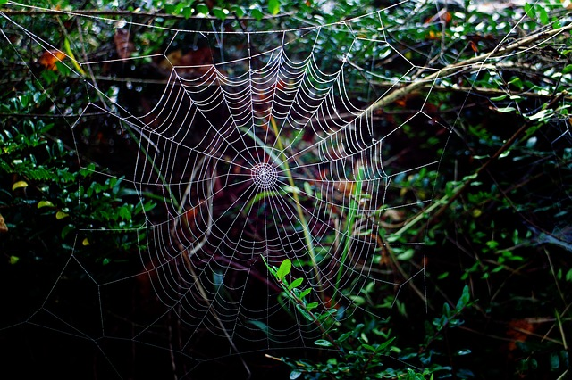 """""""Tenessee has suffered a recent spider infestation."""""""