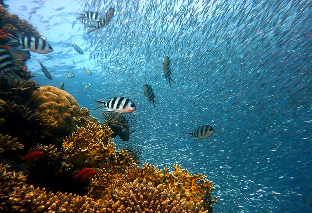 """""""Hawaii's coral reef are in danger because of rising global temperatures."""""""