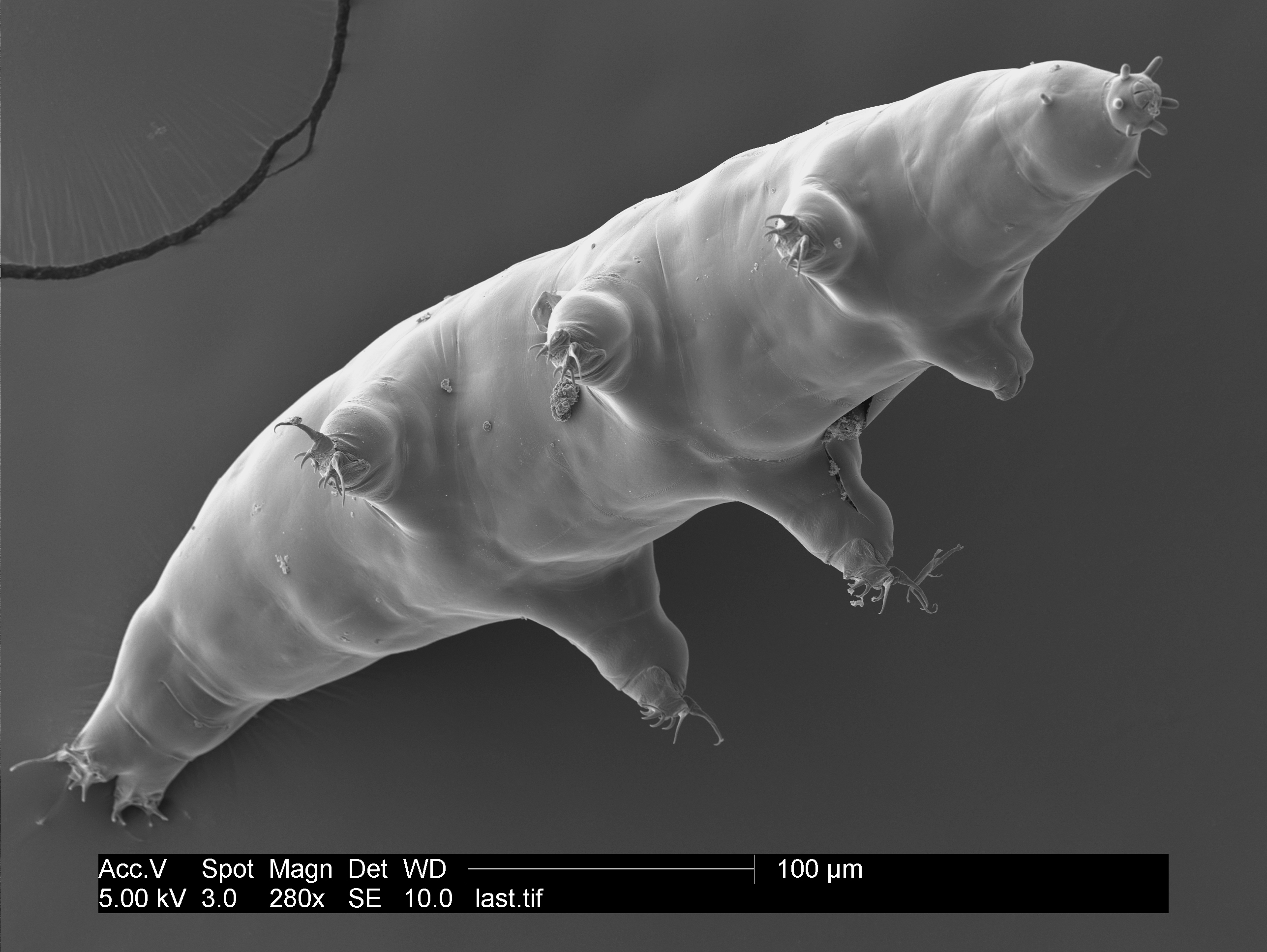 """Waterbear genome shares some DNA with some unexpected animals."""