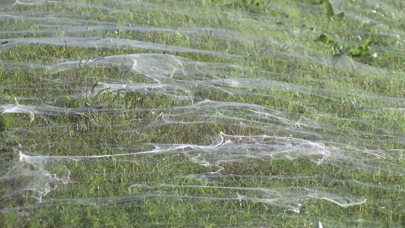 """alt=""""Millions of Spiders Take over Town in Tenn."""""""