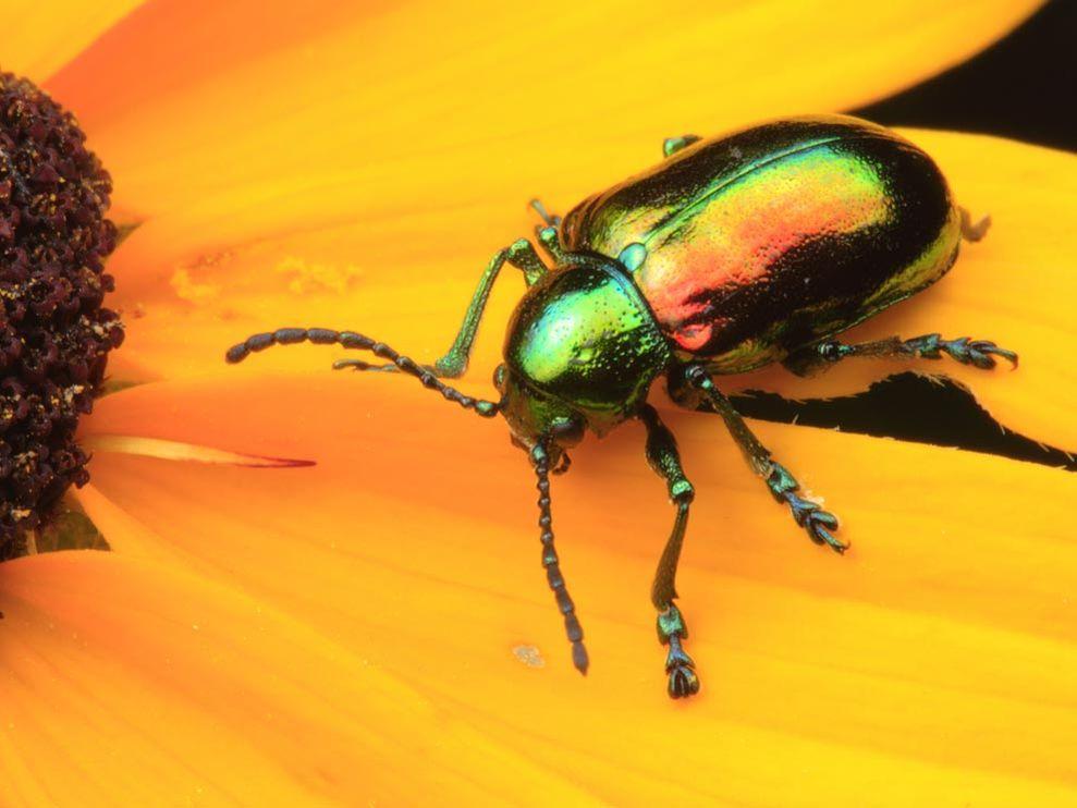 """""""non-bee pollinators"""""""