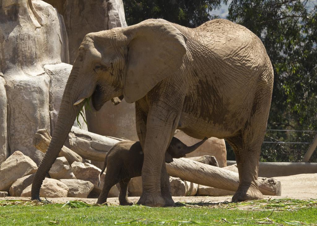 """""""zoo elephants had tuberculosis"""""""