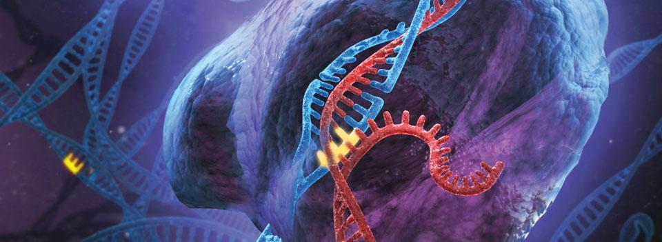 genome editing2