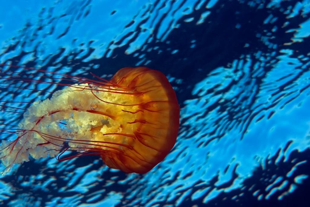 deep sea animals
