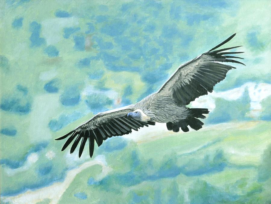 soaring condor