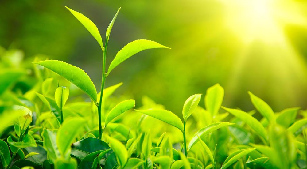 reverse photosyntesis
