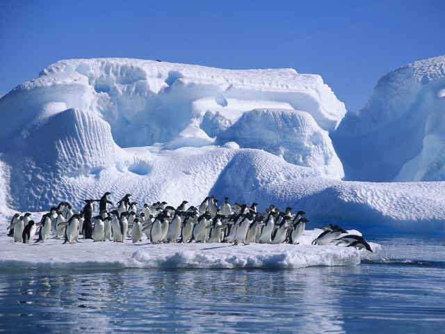 Penguins on an ice bank