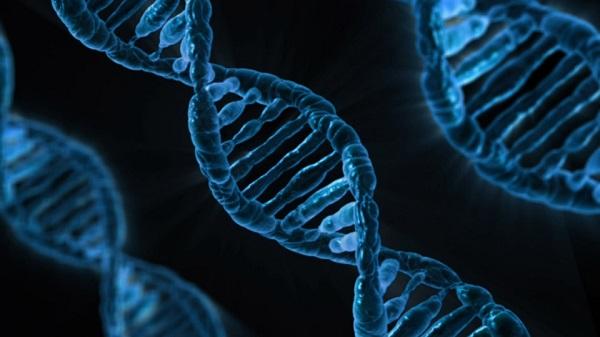 Three DNA strands