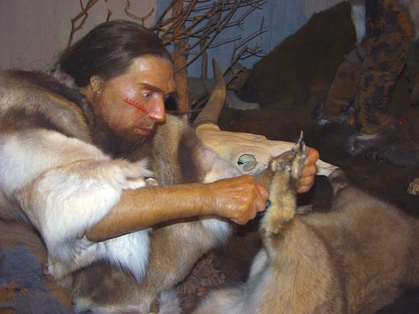 wax figure of Neanderthal man in museum