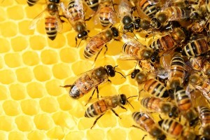 group of honeybees on honeycomb