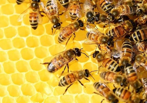 group of honeybees on honeycomb