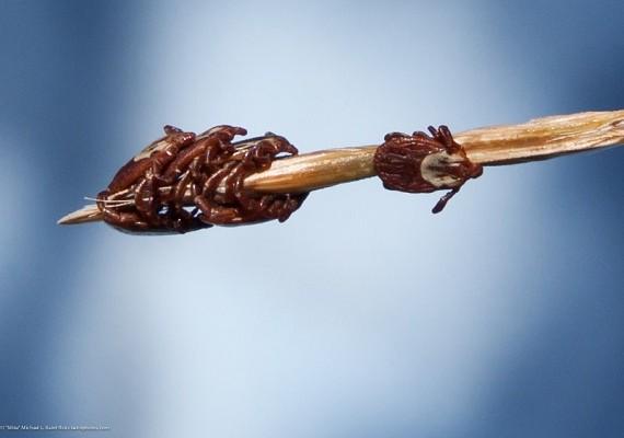 ticks season