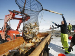 Advancement in removal of carp from Utah Lake