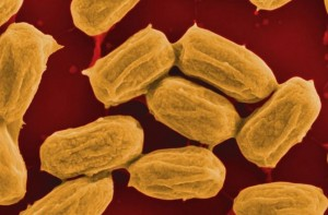 Generating Electricity Using Bacteria
