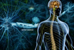 Toxins released by food-borne bacteria may trigger Multiple Sclerosis