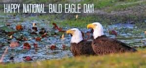 Utah Bald Eagle Day To Be Held On Feb. 9