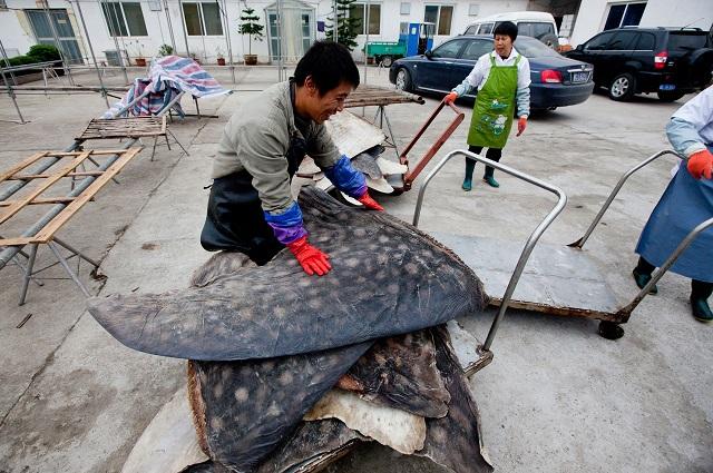 whale_shark_factory