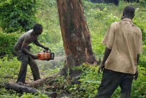 Drug trafficking in Central America speeds up deforestation