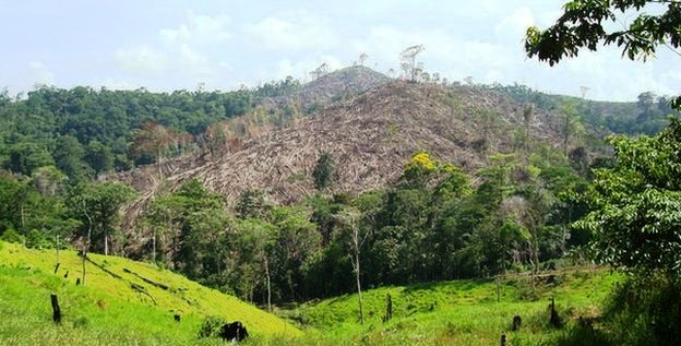 _72621106_deforestation2