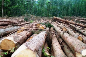 Google clubs hands with WRI to check deforestation