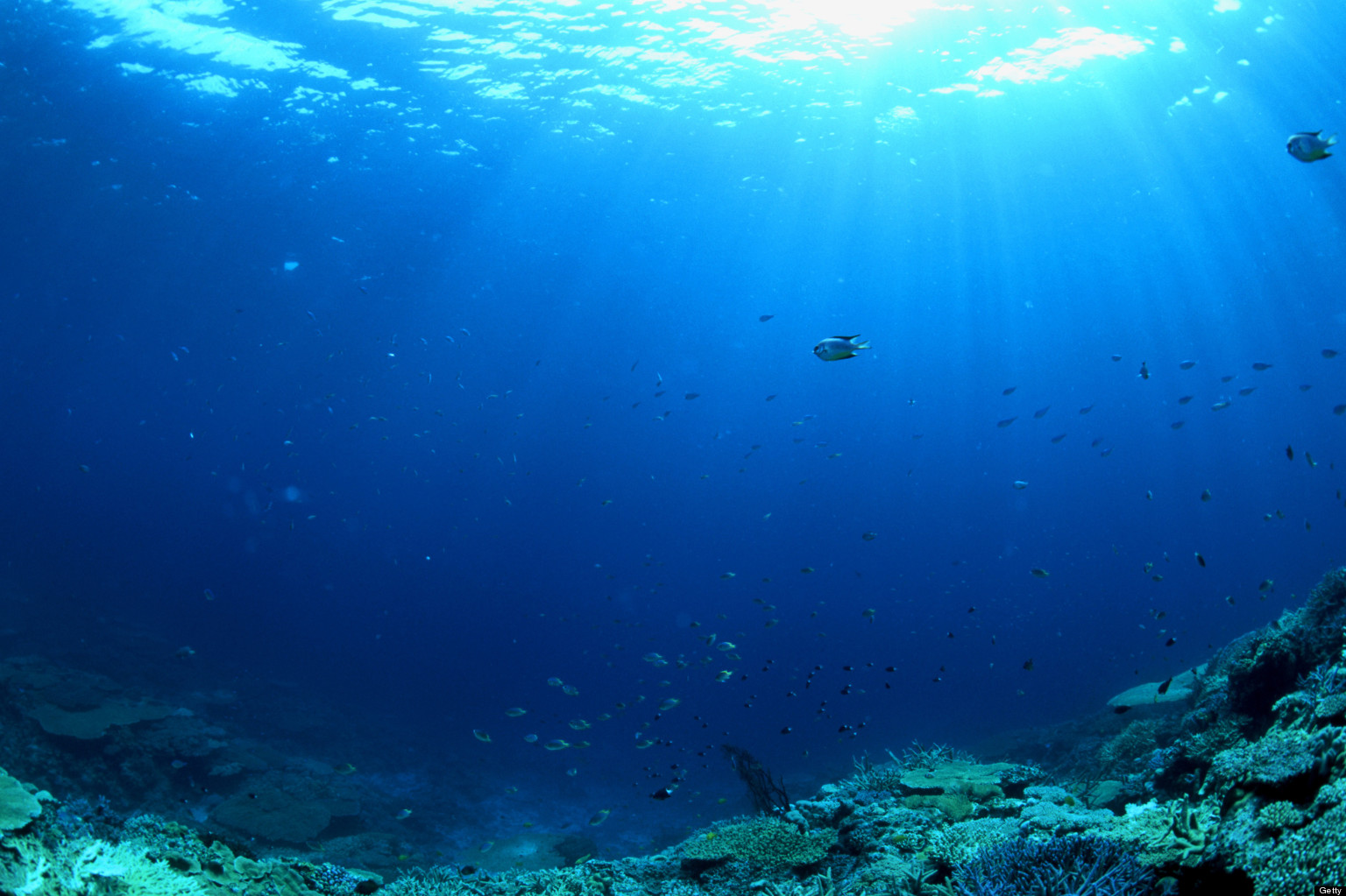 Oceans play a key role in maintaining global carbon cycle ...