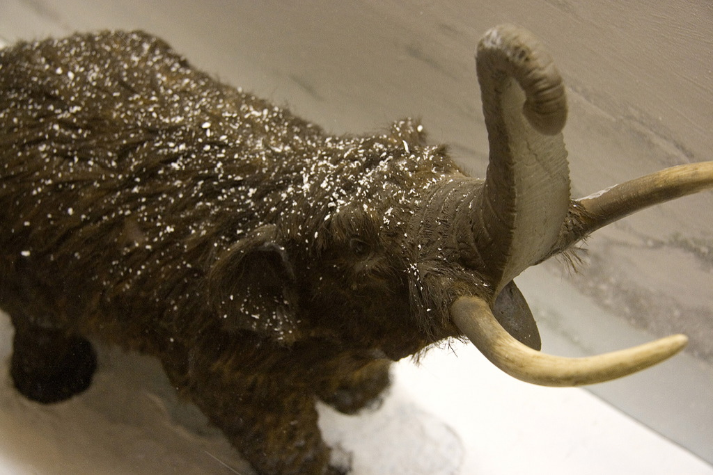 woolymammoth