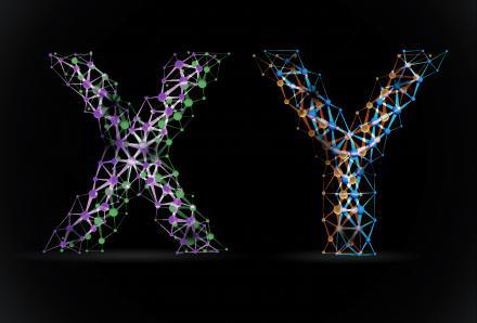 26366X-Y-chromosome